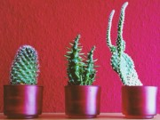 Nhà đẹp - 8 loại cây trồng mang lại phong thủy tốt cho nhà chung cư