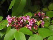 Sức khỏe - 4 loại lá nổi tiếng trị mề đay hiệu quả bạn nên biết
