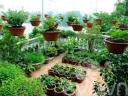 Nhà đẹp - Vườn quê xanh mát trăm hoa đua nở giữa lòng Thủ đô