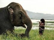 Làm mẹ - Bé gái Việt 6 tuổi huấn luyện voi lên báo Anh