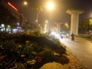 Tin tức - HN: Hàng trăm cây cổ thụ bị đốn hạ vì đường sắt trên cao
