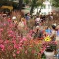 Tin trong nước - Tết Ất Mùi 2015 dự kiến được nghỉ 9 ngày