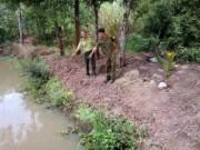 Tin tức - Khánh Hòa: Heo rừng tấn công, một HS lớp 9 tử vong