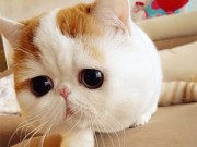 Lạ - Độc - Vui - 20 chú mèo nổi tiếng nhất trên internet