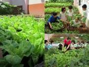 Cây cảnh - Vườn - Mỡ màng vườn rau xanh cô giáo trồng cho các bé ăn