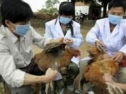 Y tế - Chưa phát hiện virus cúm A/H5N8 tại Việt Nam