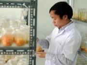 Tin nóng trong ngày - Cận cảnh đông trùng hạ thảo 7 triệu đồng/kg của VN