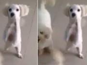 Clip Eva - Những chú cún đáng yêu xin thức ăn của chủ