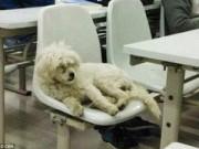Tin tức - Sinh viên TQ giận giữ vì 'chú chó học giả' bị giết