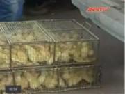 Tin tức - Gia cầm, bánh kẹo Trung Quốc ồ ạt tràn vào VN