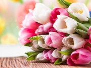 Nhà đẹp - 5 bước trồng Tulip nở đúng đợt Tết về