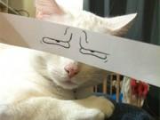 Nhật Bản: Trào lưu vẽ mắt cho... mèo