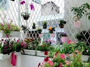 """Cây cảnh - Vườn - """"Vườn thiên đường"""" tuyệt đẹp trong ngõ nhỏ Thủ đô"""