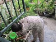 Cây cảnh - Vườn - Người mẹ đảm đang trồng rau sạch chữa bệnh vặt cho cả nhà