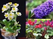 Nhà đẹp - Chị em rộn ràng trồng hoa kịp bung nở tươi tắn ngày đầu năm