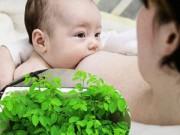 Cây cảnh - Vườn - Trồng rau ăn trong nhà cho mẹ dồi dào sữa sau sinh