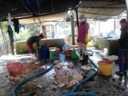 Mua sắm - Giá cả - Đồng Nai: Phát hiện cơ sở sản xuất thịt gà thối