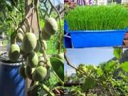Nhà đẹp - TP.HCM: Vườn rau mỡ màng phát triển không cần đất