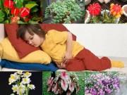 Nhà đẹp - Những loại cây trồng trong nhà nguy hại nếu trẻ nhỏ lỡ ăn phải