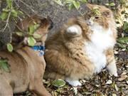 Lạ - Độc - Vui - Mèo chăm chó để… giảm cân