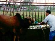 Tin tức - Đột nhập hai cơ sở bò bơm nước ở Đồng Nai