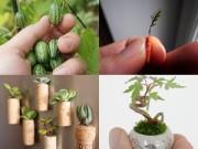 Cây cảnh - Vườn - 2014: Chị em phát cuồng mốt trồng cây cảnh tí hon