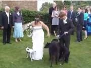"""Tình yêu - Giới tính - Cười """"té ghế"""" với những sự cố trong đám cưới"""