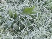 Tin tức - Vùng núi phía bắc có băng giá, sương muối