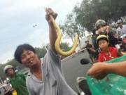 Tin tức - Đi xe hơi mang 3 bao tải rắn đổ xuống ruộng