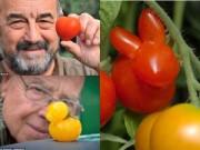 Nhà đẹp - Khi những người đàn ông trồng cà chua ngọt ngào