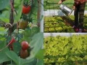 """Nhà đẹp - Vườn rau đánh luống trên sân thượng đầy """"hấp dẫn"""" của người Hà Nội"""