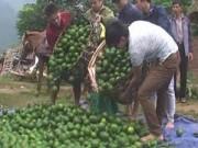 Tin tức - Cam Việt Nam bị nghi của Trung Quốc vì giá quá rẻ