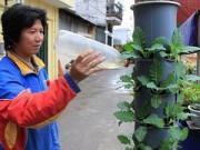 Nhà đẹp - Họa sĩ tự do hướng dẫn trồng cây tại gia trong ống nước