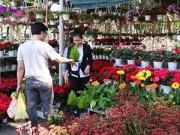 Ngày mới - Nhiều hoa, cây lạ xuống phố đón Tết Ất Mùi