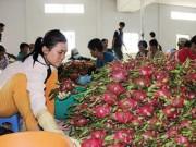 """Mua sắm - Giá cả - Trái cây Thái """"mượn"""" Việt Nam tiến vào Trung Quốc"""