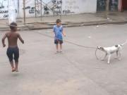 Clip Eva - Độc đáo chú cún chơi nhảy dây với trẻ
