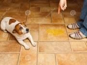 Nhà đẹp - Tuyệt chiêu khử sạch mùi nước tiểu chó mèo trong nhà