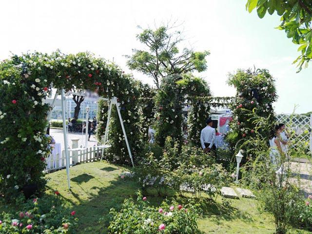 Bất ngờ với vườn hồng lớn nhất Việt Nam