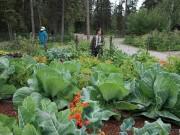 Nhà đẹp - Học bí quyết trồng rau củ quả khổng lồ của dân Alaska