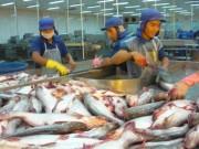 Cá tra Việt vẫn chịu thuế chống bán phá giá