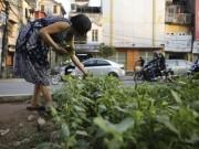"""Nhà đẹp - Gặp """"nông dân phố"""" trồng rau dưới đường sắt trên cao"""