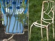 Nhà đẹp - Chàng trai 5 năm ép cây liễu thành ghế, bán giá 80 triệu đồng