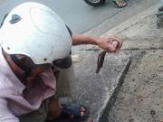 Tin tức - Độc đáo nghề câu cá trê ngay giữa đường phố