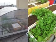 Nhà đẹp - Trai Hải Phòng chi 4 triệu làm nhà lưới trồng rau sân thượng