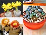 Nhà đẹp - Hoa thạch lan đẹp lạ, giá rẻ hút hồn chị em văn phòng