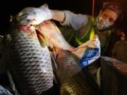 Clip Eva - Cá chết trắng hồ Tây có thể là do tầng đáy bị ô nhiễm nặng, thiếu oxy