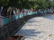 Tin tức - Cá chết ở Hồ Tây: Dân bịt mũi, quán đóng cửa vì mùi hôi thối