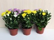 Nhà đẹp - Top cây trồng có tác dụng làm sạch không khí nên trồng trong nhà