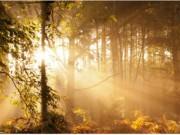 Ngất ngây với những hình ảnh tuyệt đẹp về mùa thu trên khắp thế giới