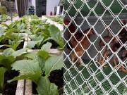 Nhà đẹp - Ông bố đảm vừa trồng rau còn nuôi chim, gà trên sân thượng phục vụ con nhỏ